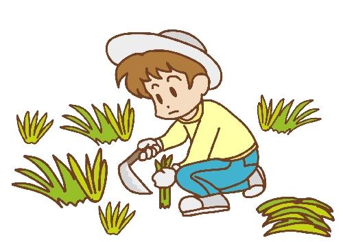 庭の手入れ 植木伐採剪定・ アップターン